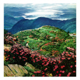 """""""Appalachian Rhododendrons """" May 27  1961"""