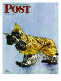 """Butch in Raingear "" Saturday Evening Post Cover  April 2  1949"
