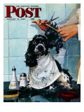 """Butch's Haircut "" Saturday Evening Post Cover  January 31  1948"