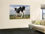 World's Largest Holstein Cow