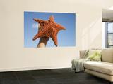 Person Holding Up Large Starfish at Curacao Sea Aquarium  Bapor Kibra