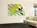 Rufous-Tailed Hummingbird (Amazilia Tzacatl) Sitting in Nest