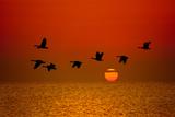 Sunrise Flight