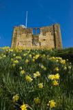 Guildford Spring