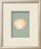 *Exclusive* Irish Deep Shell Shadowbox - Seafoam
