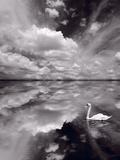 Swan Lake Explorations BW