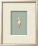*Exclusive* Baby Tibia Shell Shadowbox - Seafoam