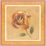 Golden Roman Rose