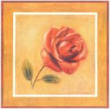 Red Roman Rose