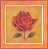Crimson Roman Rose