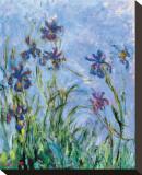 Les iris (détail) Tableau sur toile par Claude Monet