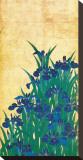 Irises  Japanese