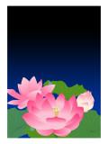 Lotus at Dark Night