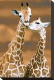 Giraffe First Love Tableau sur toile par Ron D'Raine