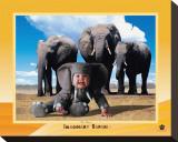 Imaginary Safari  Elephant