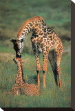 Giraffes Mother and Baby