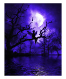 Celestial Night