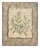 Vintage Herbs  Sage