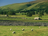 Field Walls of Littondale  Yorkshire Dales National Park  England