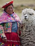 Peru, a Female with an Alpaca at Abra La Raya Papier Photo par Nigel Pavitt