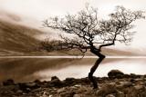 Loch Etive Reproduction d'art par Danita Delimont