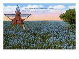 Field of Blue Bonnets  Texas State Flower