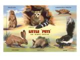 Creatures of the West Texas Desert