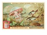 Aquatic Fauna  Jellyfish