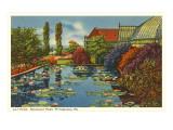 Lily Pond  Schenley Park  Pittsburgh  Pennsylvania