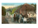 Fir Log  Lumberjacks  Washington