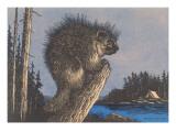 Porcupine on Stump