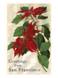 Greetings from San Francisco  California  Poinsettias