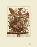 Twelve Months of Flowers  1730  August