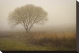 Tree in Field Tableau sur toile par David Winston