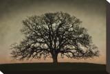 Majestic Oak Tableau sur toile par David Winston