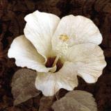 Verdant Blossom