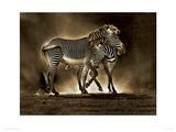 Zebra Grevys