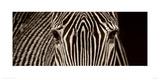 Zebra Grevy