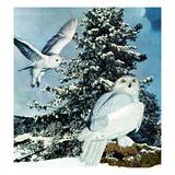 """Snowy Owls""  September 14  1957"