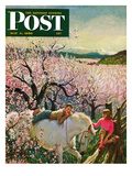 """Apple Blossom Time"" Saturday Evening Post Cover  May 6  1950"