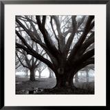 Oak Grove  Winter