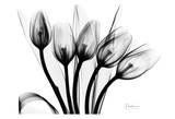 Early Tulips N Black and White Reproduction d'art par Albert Koetsier