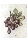 Glorious Grapes