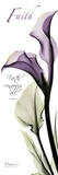 Calla Lily in Purple  Faith