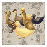 Dancing Ducks