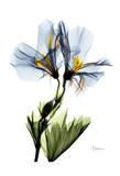 Gracious Geranium