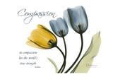 Tulip  Compassion
