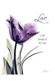 Purple Tulip  Love