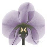Precious Orchid in Purple Reproduction d'art par Albert Koetsier
