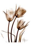 Tulip Arrangement in Brown Reproduction d'art par Albert Koetsier